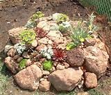 rock_garden2