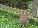 vegetable garden fence ideas rabbits