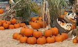 fall into mdrgc for planting ideas and photos in our pumpkin patch