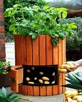 Cool idea | Garden Club :D | Pinterest