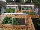 home-vegetable-gardening | Gardening Ideas