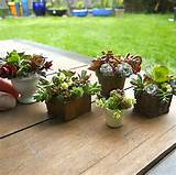 ideas for succulent container gardens hgtv gardens