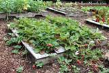Pallet Garden