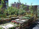 london s pop up community garden known as union street orchard a