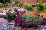 using drought tolerant plants rock gardens mulch using perennial