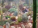 jardines de cactus blogicasa blogicasa