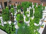 Growing UP in Manhattan - extreme vertical gardening by selena