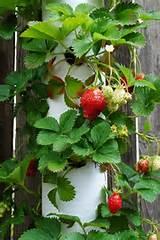 ... Planter- corners of garden fence. | DIY Garden Ideas | Pinterest