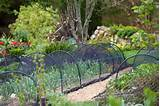 great vegetable patch garden ideas inspiration pinterest