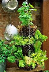hanging baskets with herbs gardening ideas pinterest