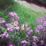 real butterfly garden garden ideas pinterest