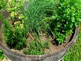 easy herb gardening container garden real life with sarah