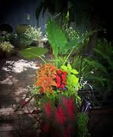 Container Garden Idea | Gardening ideas | Pinterest