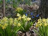 spring garden gardening garden ideas pinterest