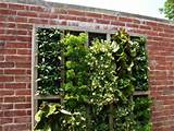 Rent to Own.ph Blog: Inspiring Vertical Gardens for Small Spaces