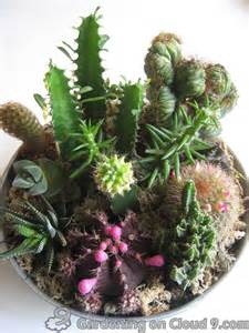 cacti than my other cactus tabletop garden cactus garden i