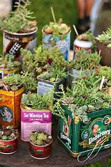succulents in colorful tins | Plants | Pinterest