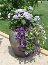 15 Beautiful Backyard Ideas for Hydrangea Shrubs Blending PInk and ...