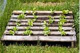 25 ways of how to use pallets in your garden designrulz com
