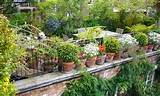 ... > Urban Garden > Small Urban Vegetable Garden Ideas Inspirations