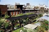 org roof garden design ideas chicago roof garden design ideas