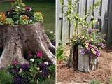 ways to decorate old tree stumps in garden flower bed