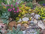 traditional rock garden plants in the author s garden leo chance