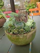 Succulent garden gifts under $50