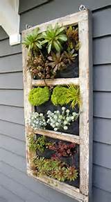 ... Gardens Ideas, Windows Frames, Old Windows, Succulent Gardens, Gardens