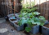 homes & gardens, Picking a spot for your vegetable container garden ...