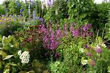 Cottage gardens for small spaces