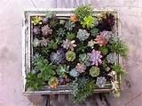 Armygurumi, amigurumis y otras cosas de la vida: Jardin vertical de ...