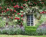 pretty climbing roses lavender garden ideas pinterest