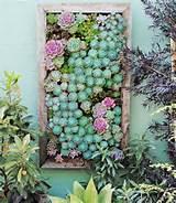 ... Ways to Plant a Vertical Garden - How To Make a Vertical Garden