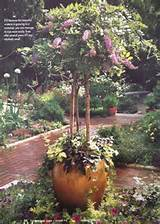 Source: Garden Gate Magazine- Nov.- Dec. 2006 -- Issue 72, pg. 30