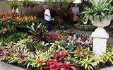tropical bromeliad garden design hd walls find wallpapers