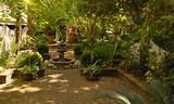 shade garden gardening tips garden guides