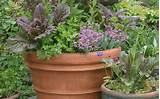 ... Container Gardening > Organic Container Gardening For Beginners Ideas