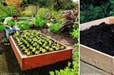 if you wish to grow your own vegetables this summer