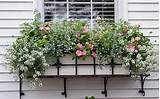 windowbox_ideas_pink_blue_white
