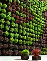 vertical garden great gardens ideas