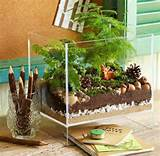 ... ideas miniature gardens mini garden fairy gardens diy terrarium lowe