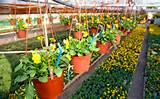 garden drip irrigation ideas http www webgardeningtips com beginners