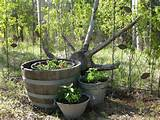 rustic landscaping ideas share flowers and gardening pinterest