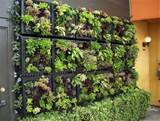 vertical garden design adding natural look to house exterior and