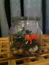 diy jungle jars slash mini terrariums small succulent can get at