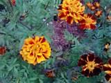 Fall garden | Fall garden ideas | Pinterest