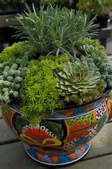 ... touch with this succulent container - Winter Idea / Pike Nurseries