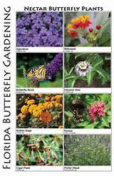 ... Florida, Butterfly Garden Florida, Butterfly Garden Ideas Florida
