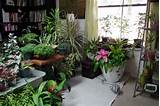 Best Indoor Garden Designs – Dallaire Designs